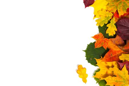 Autumn card of colored leafs over white background Stock Photo - 15529205