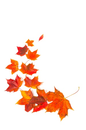 autumn maple leaves over white