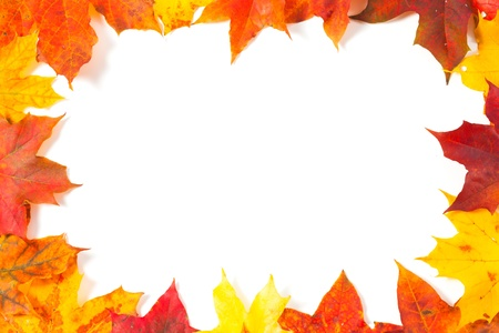 autumnal: Beautiful autumn maple leaves with copy space for your text