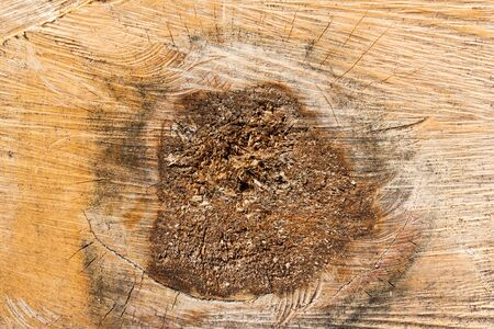 slice of wood timber natural background Stock Photo - 15805055