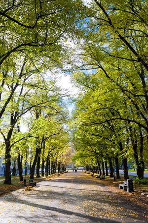 road autumnal: Pathway through the autumn park with benches