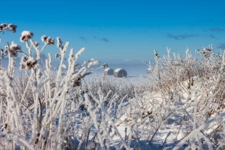 snowy hay bales near farm with grass (foggy weather) Stock Photo - 16032798
