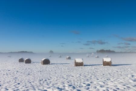 snowy hay bales with fog near farm Stock Photo - 16032808