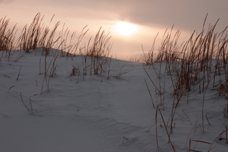 Grass in snow dunes at sunset near north sea Stock Photo - 16513635
