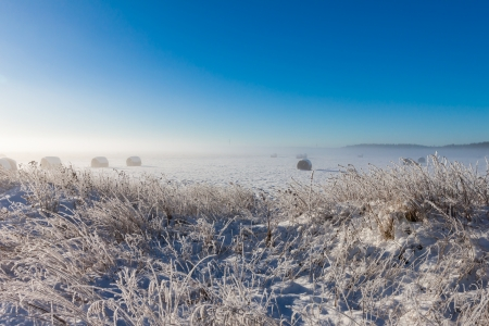 snowy hay bales near farm with grass (foggy weather) photo