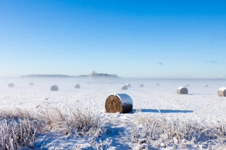Bales of hay laying in snow on field Stock Photo - 16789750
