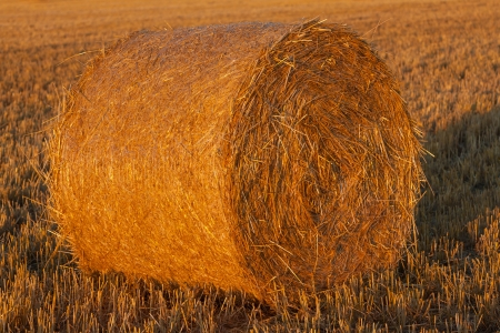 round bale of straw in the meadow, sunset photo