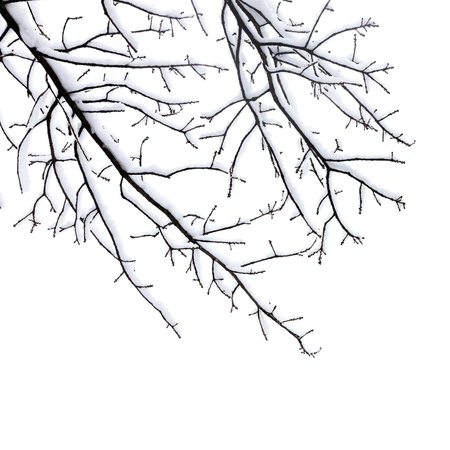 Winter tree conceptual image  Black and white art photo