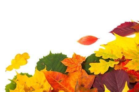 beautiful colorful autumn leaves isolated on white background photo