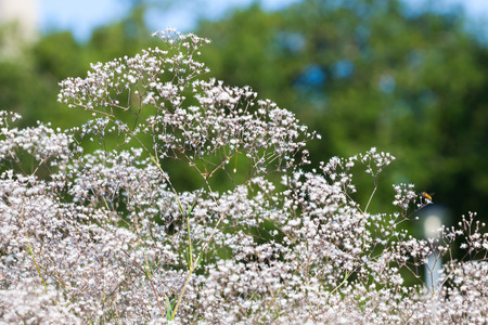 Pretty small white flowers blooming in a garden Stock Photo - 23986474
