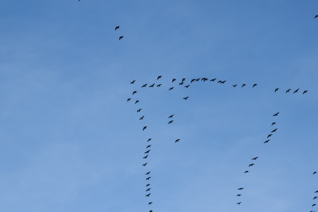 migration of birds to the south or maybe to the north photo