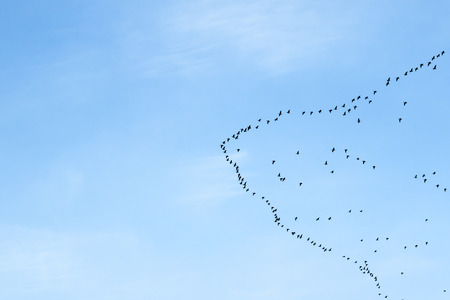migration of birds to the north or to the south photo