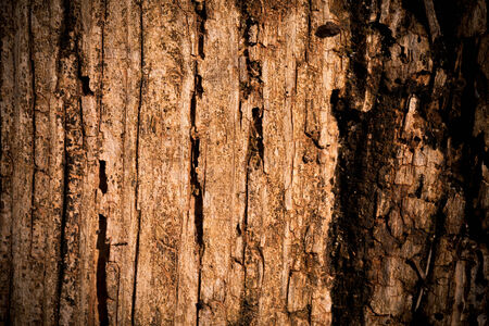 very dirty: Very old wood as a texture background