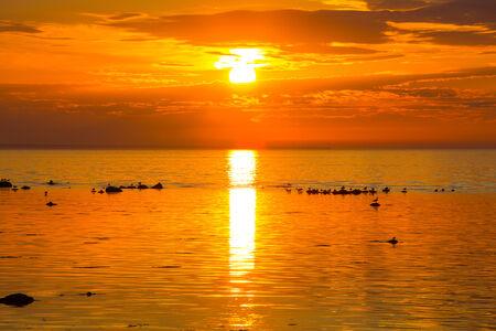 Sea with sunset - birds on the rocks photo