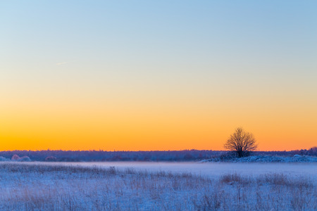 Winter snowy rural landscape in evening with litle fog photo