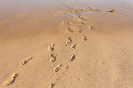 windward: Small and large footprints in the sand