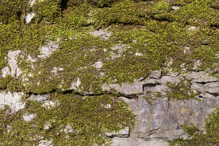 Background of old stone wall texture with moss photo