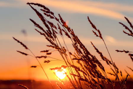 strong wind: Grass at sunset with strong wind and sun at background Stock Photo
