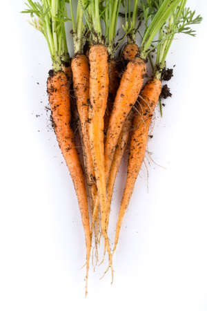 carrots: heap of freshly picked carrots isolated on white