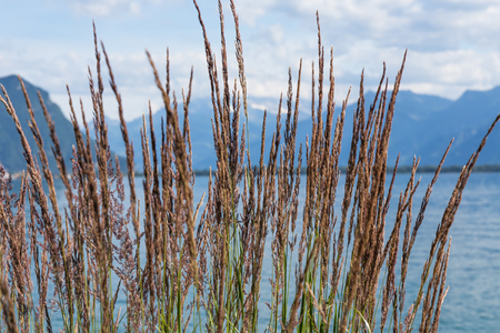 montreux: Grass against mountains and lake Geneva from the Embankment in Montreux. Switzerland Stock Photo