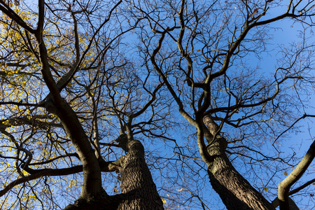 aureate: Vibrant colored treetop in front of blue sky at autumn time Stock Photo