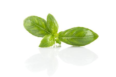 wet leaf: Fresh green wet leaf basil isolated on a white background Stock Photo