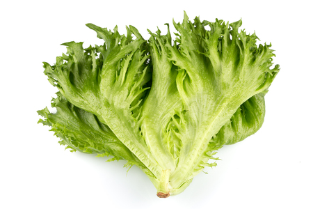 Green fresh lettuce salad texture close up shot on white background