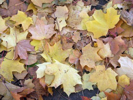 黄色を葉します。 写真素材