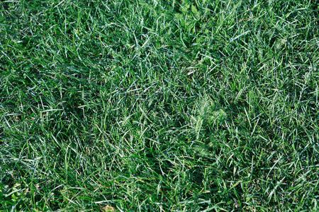 green grass for background, spetember, daily time Stock Photo