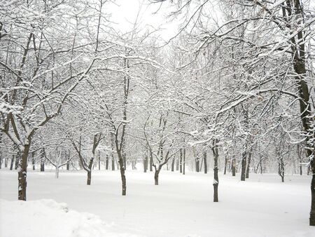 after snowfall in city park