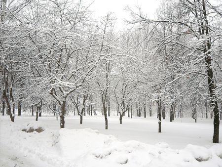 都市公園における降雪の後 写真素材