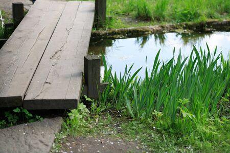 carex: japan garden by Nakajima in moscow Stock Photo
