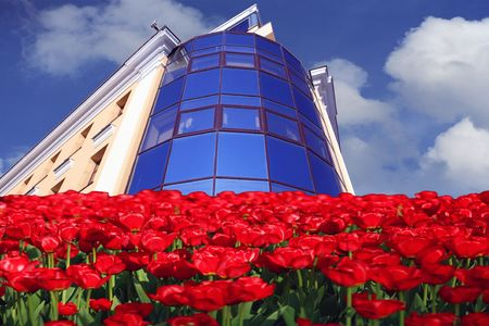 office building on sky background and red tulip foreground photo