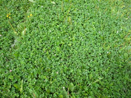 green clover grass at day photo