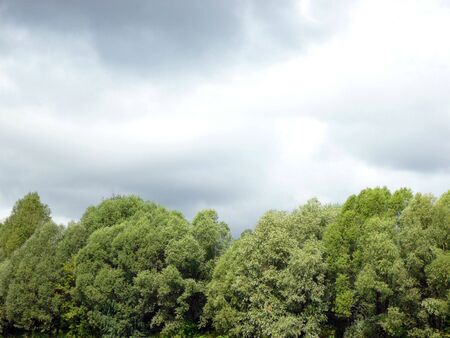 lowering: green wood  and lowering clouds at day