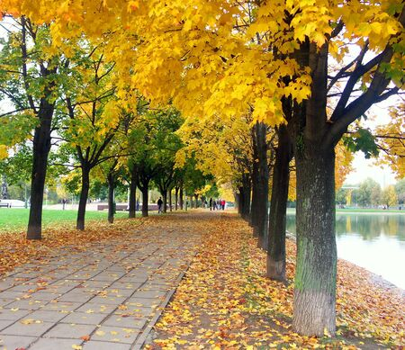 maple alley in city park