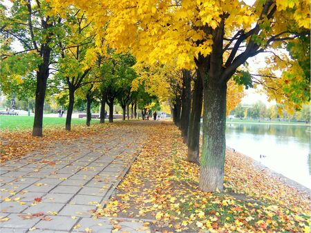 maple alley in city park photo