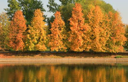 city park in gold fall, september ,morning photo