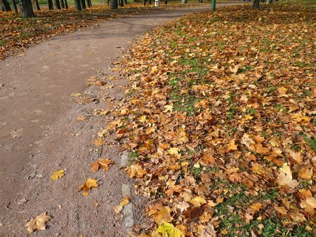 autumn road in city park at day photo