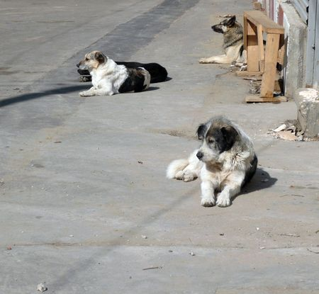 sad dog: stray dogs on street at day