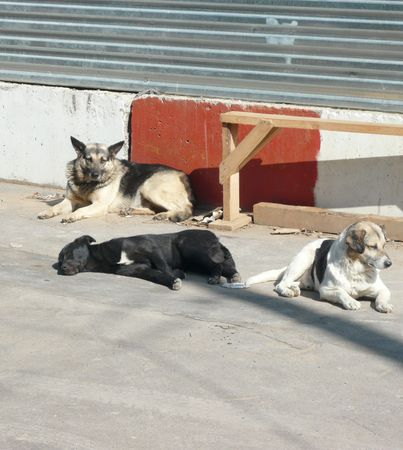 stray dogs on street at day photo