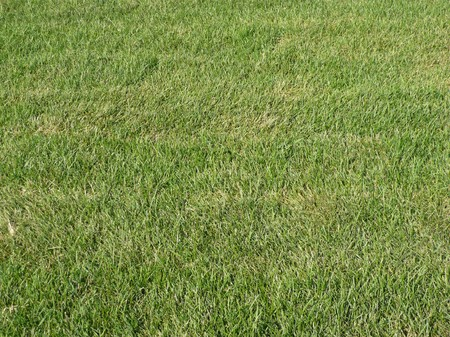 green grass for background, daily time photo