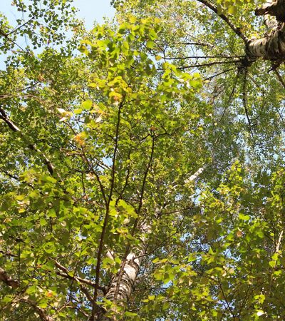green leafs on trees at autumn, september, daily time photo