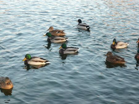 ducks on water at day photo