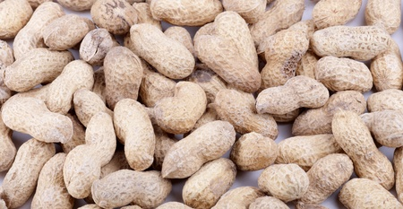 groundnut: groundnut background