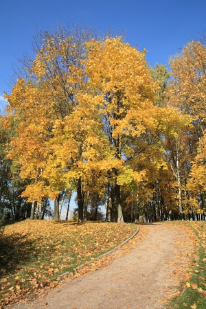maple alley at autumn Stock Photo - 12952791
