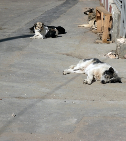 stray dogs on street at day Stock Photo - 13736977