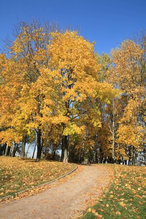 maple alley at autumn photo