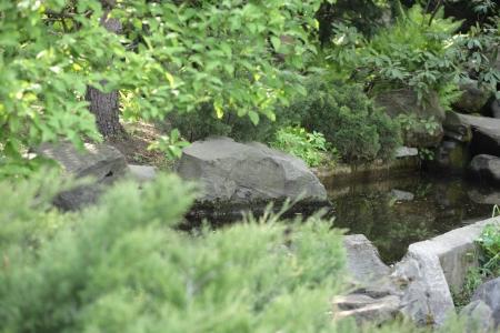 japan garden by Nakajima in moscow photo