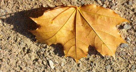 maple leaf on earth photo